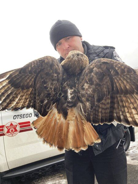 Police help woman rescue injured hawk on I-88