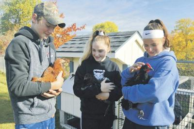 UV adds chickens to agriculture program