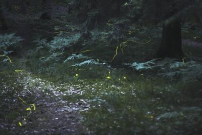 Guest Commentary: Humans can help fireflies shine
