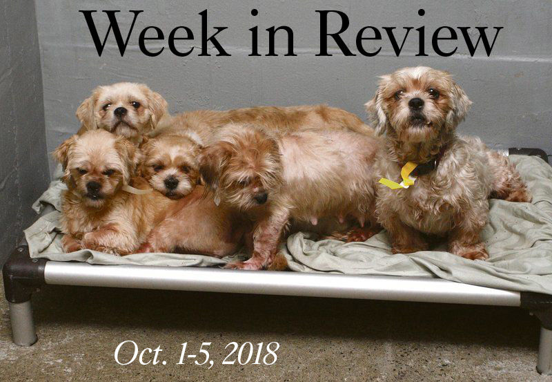 Week in Review: Oct  1-5, 2018 | Local News | thedailystar com
