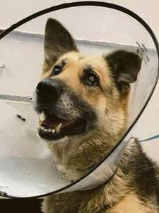 Man arrested after dog found in 'disturbing' condition