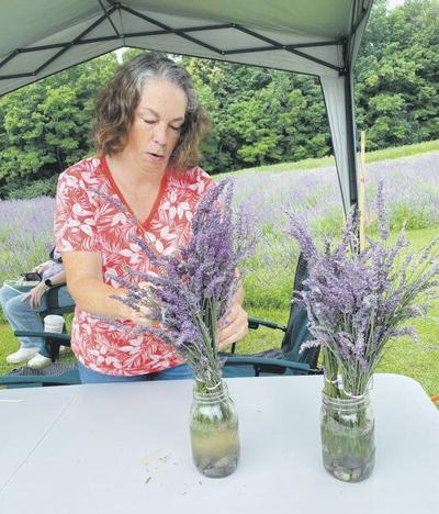 Lavender is a growing business in Sherburne