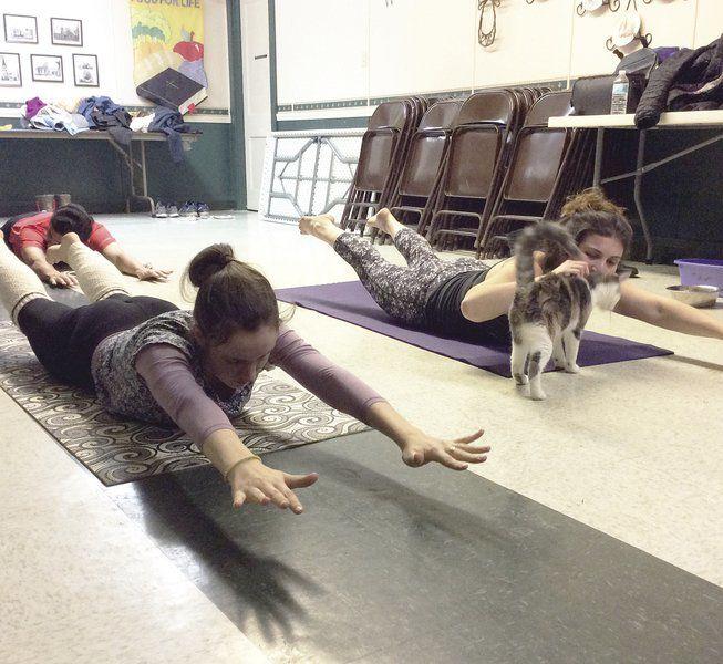 Church, animal shelter team up for cat yoga