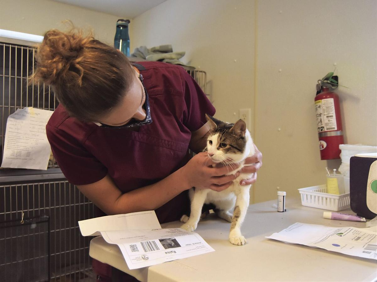Shelter welcomes shipment of cats from Staten Island