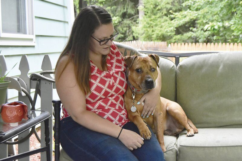 Fighting-ring horror still lingers with dogs, caretakers after rescue