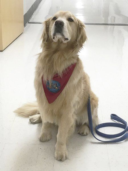 Fox Hospital therapy dogDuncan dies afterillness