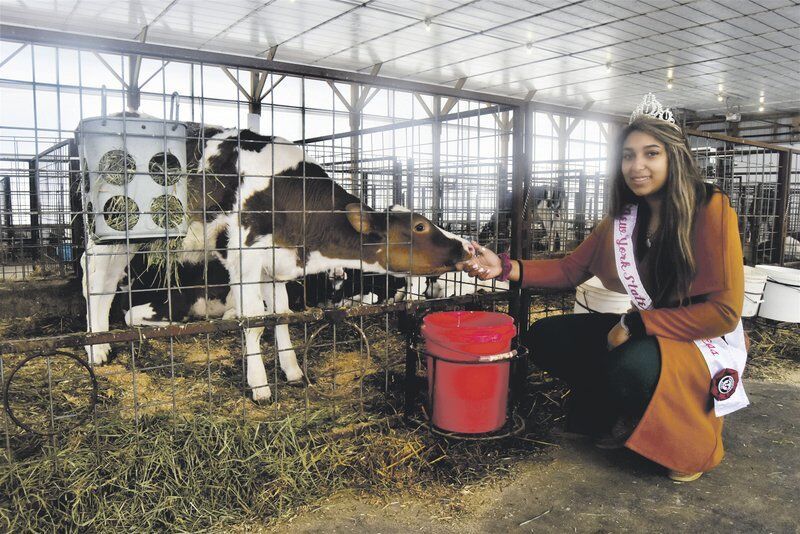 Dairy Princess pioneer charts unique course