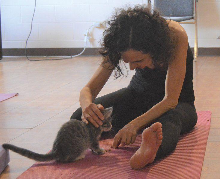 Cat yoga offers 'purr-fect' pose