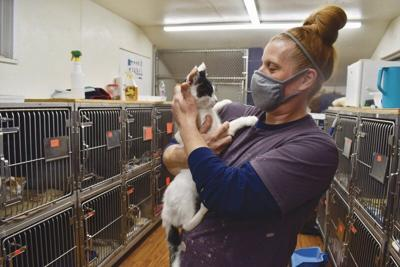 90 cats seized from home
