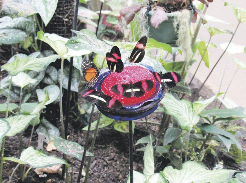 On the Bright Side: Butterfly Conservatory reopens after nearly two years