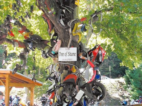 Riders Of The Dragon Sometimes End Up On Tree Of Shame News