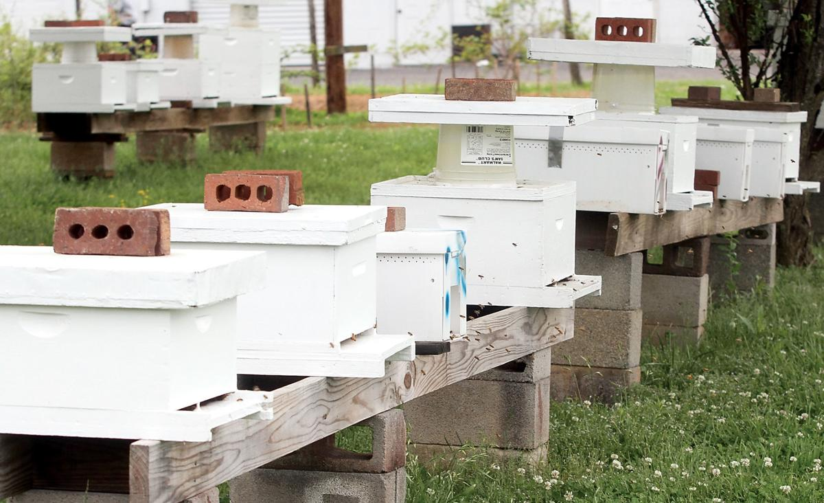 Howard Kerr maintains 80 bee hives around Blount County