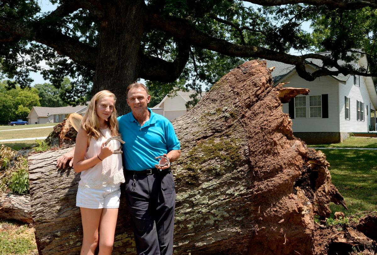 Broyles family cleans up after historic tree falls