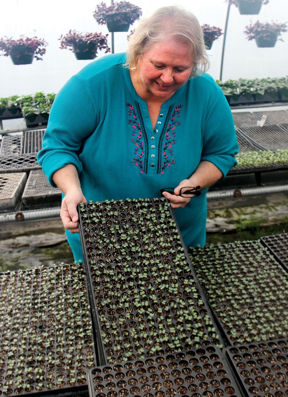 Donna Butler at McMahan's Produce