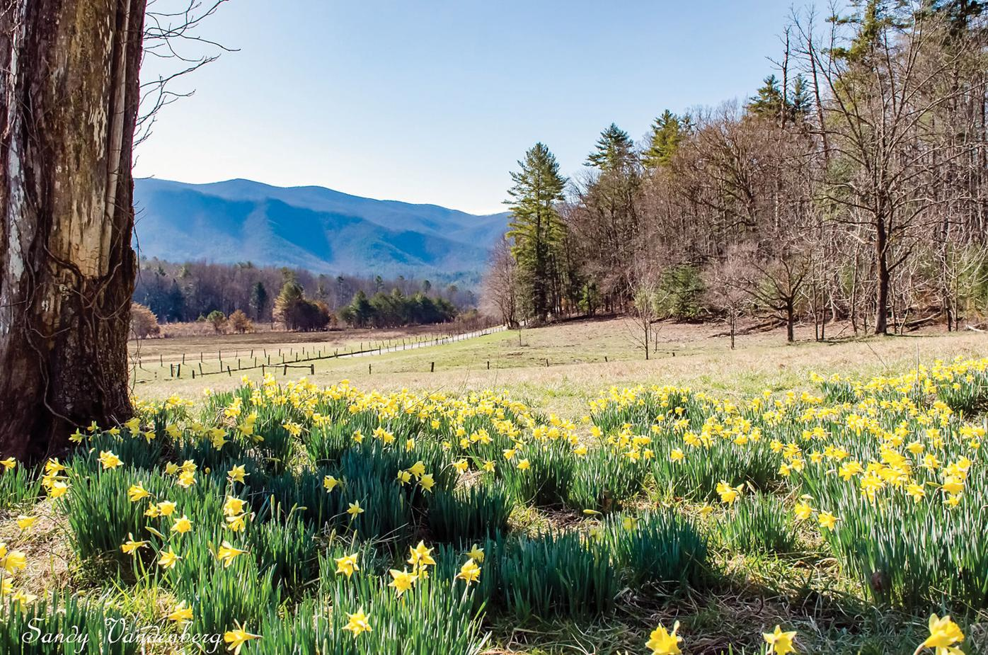 Flowers in Cades Cove