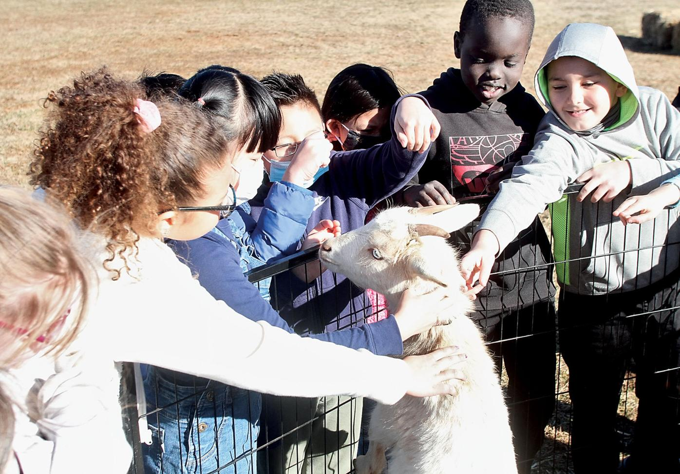 Foothills Elementary School students pet goat