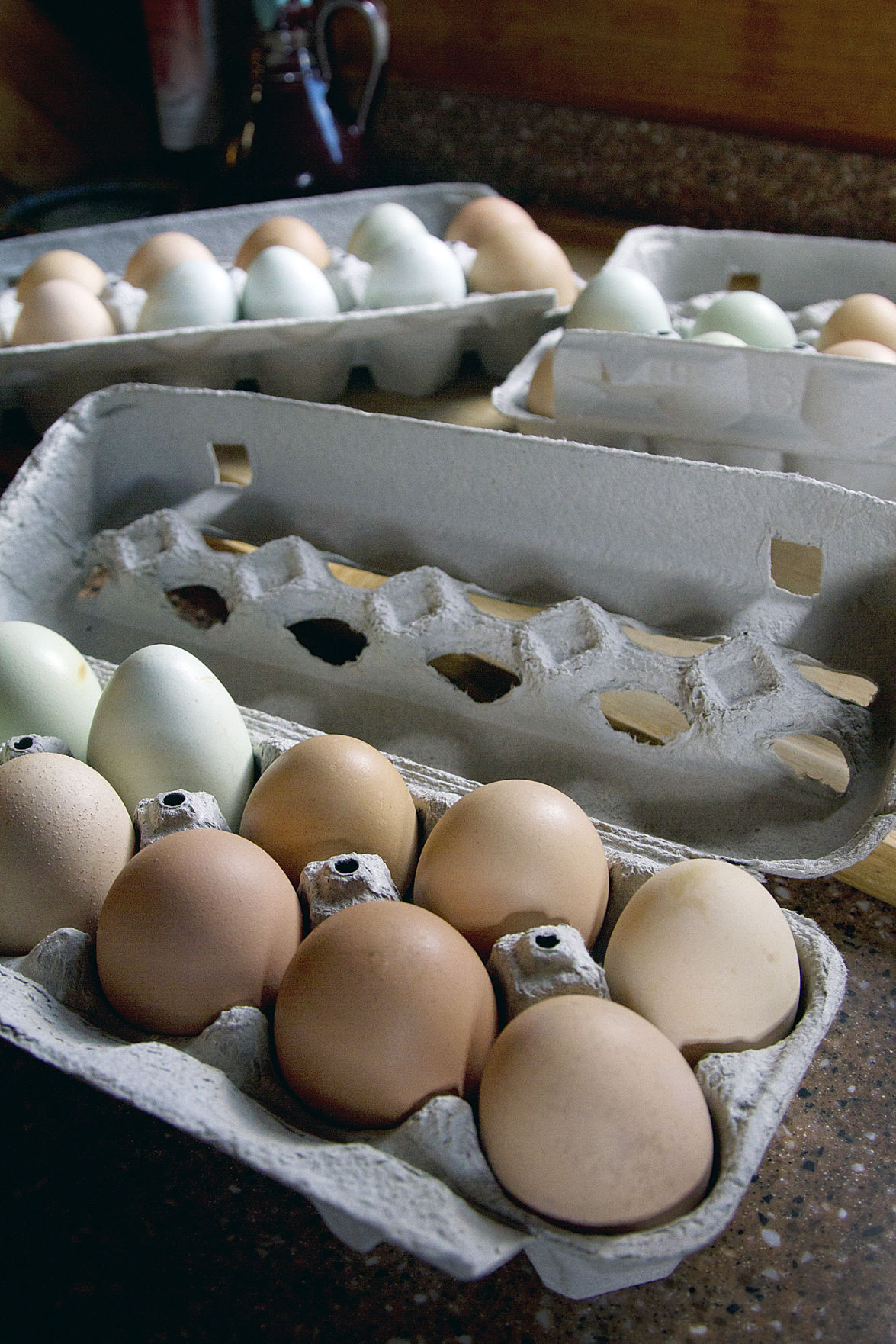 Backyard chickens offer unexpected benefits | News ...