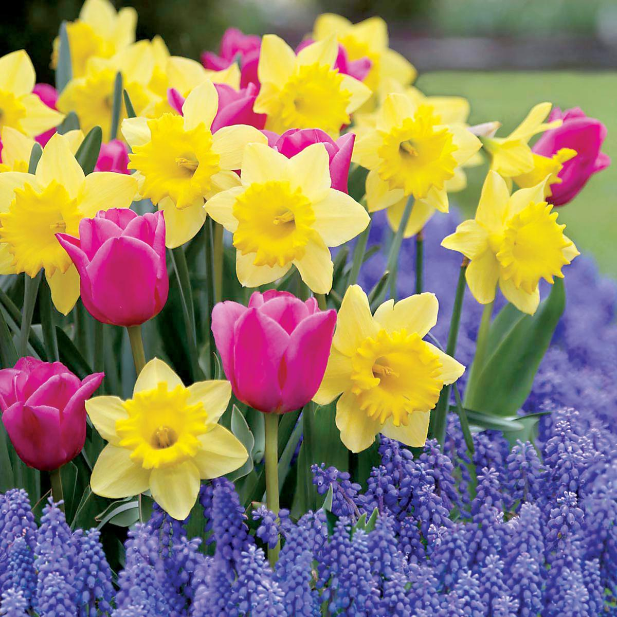Add Bulbs To Garden This Fall For Spring Bloomers Community