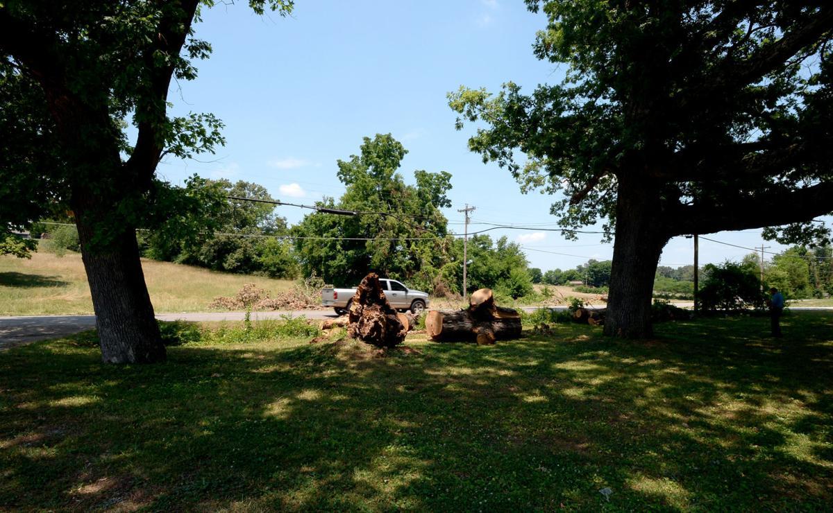 Historic tree falls