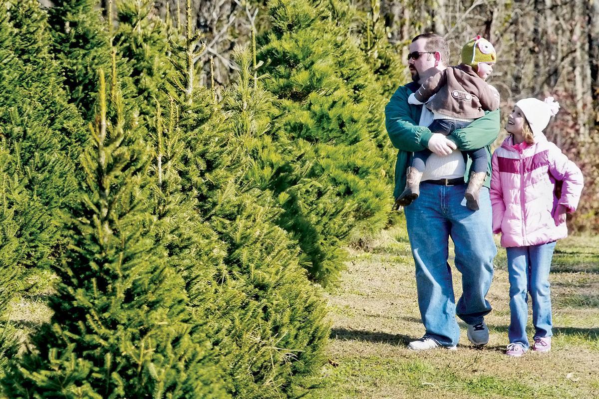 Blount Christmas tree farmers ready for buyers   News ...