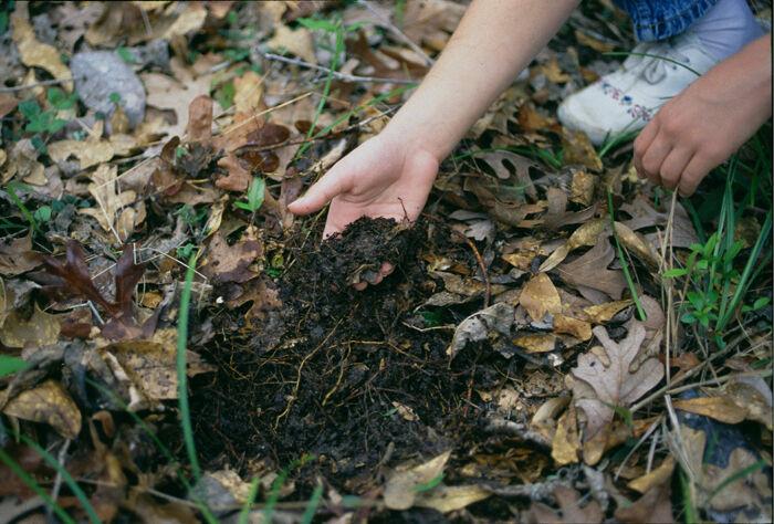 RICHTER: Fallen leaves
