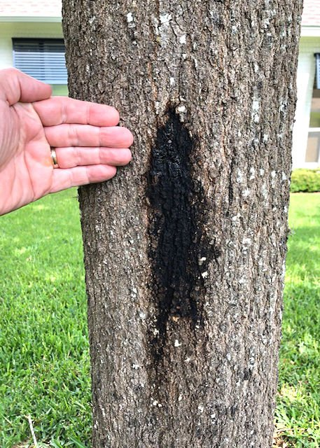 TEXAS GARDENING: Tree trunk with decay