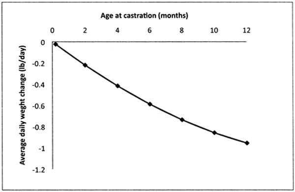 Calf castration considerations: Which method to use? | Land