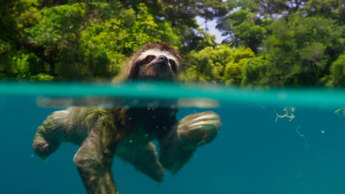 Are nature documentaries the greatest art of our time?