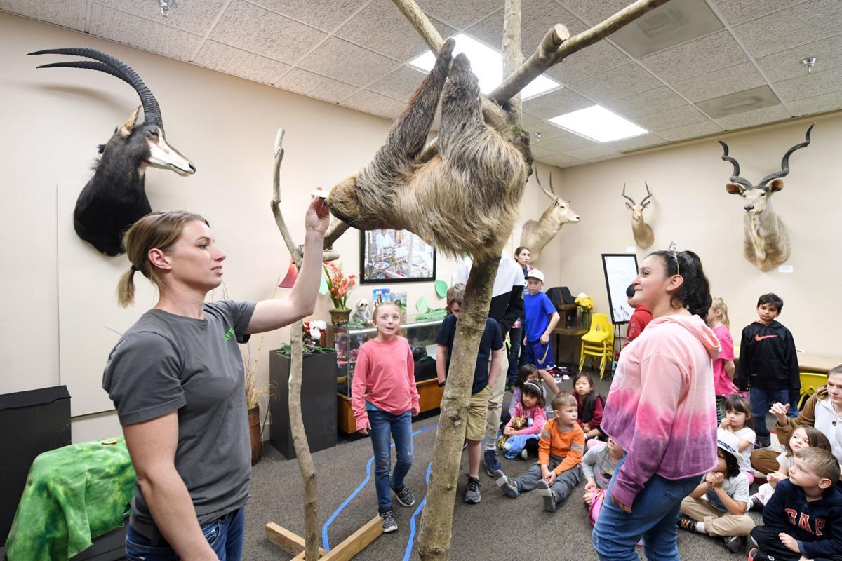Sloth visits BVMNH