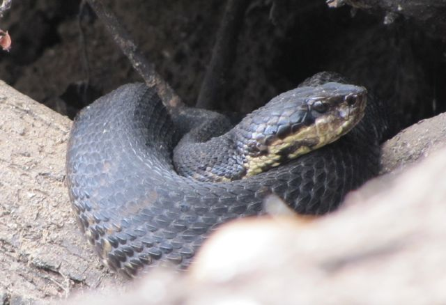 Texas A&M, TPWD experts: Watch out for snakes as weather