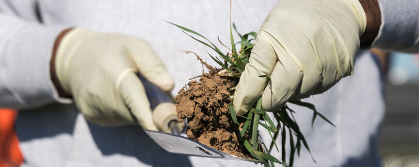 Soil testing puts lime, fertilizer needs in focus