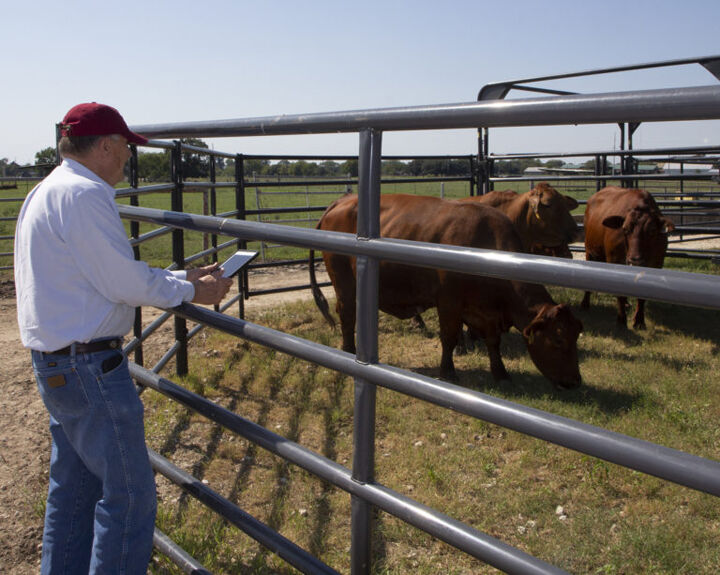 AgriLife aims to aid rural veterinary practices with new network project