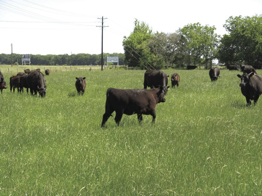 letter f video classical grass continuous vs grazing of 22817 | 5a1346fa22817.image