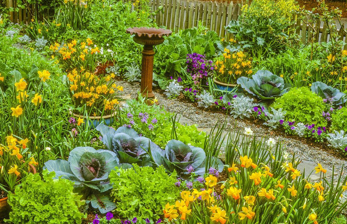 Master Gardener Add Vegetables To Your Flower Beds For Edible Landscape Gardening