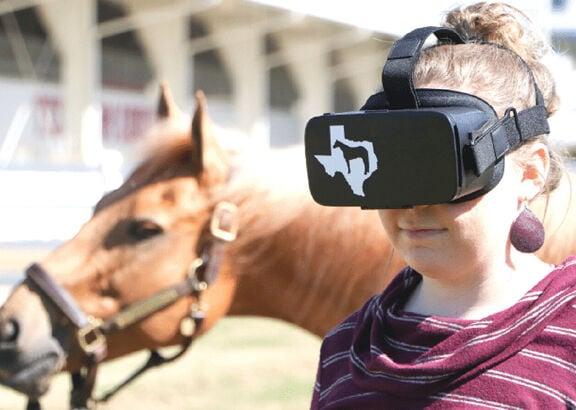 VR horse judging