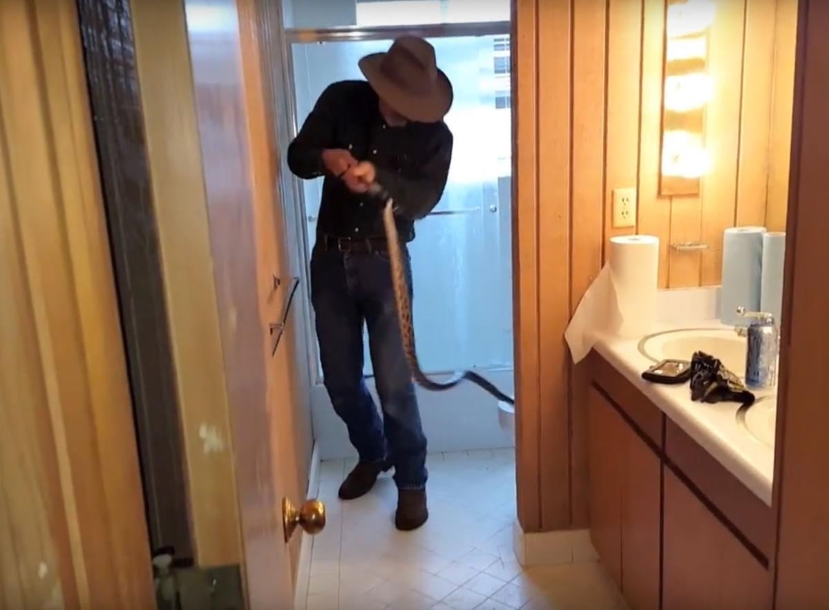 Call of nature: Snake found in toilet