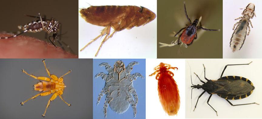 Texas A&M AgriLife helping digitize parasite specimens