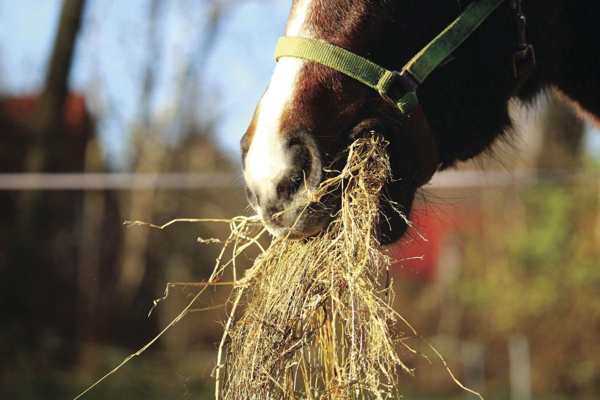 roughage for your horse