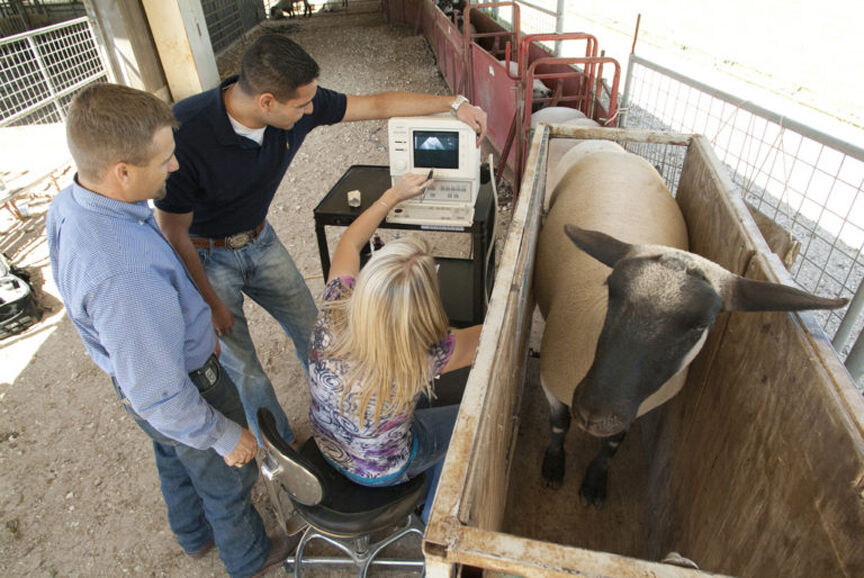 Texas A&M plans to become world's top animal science department