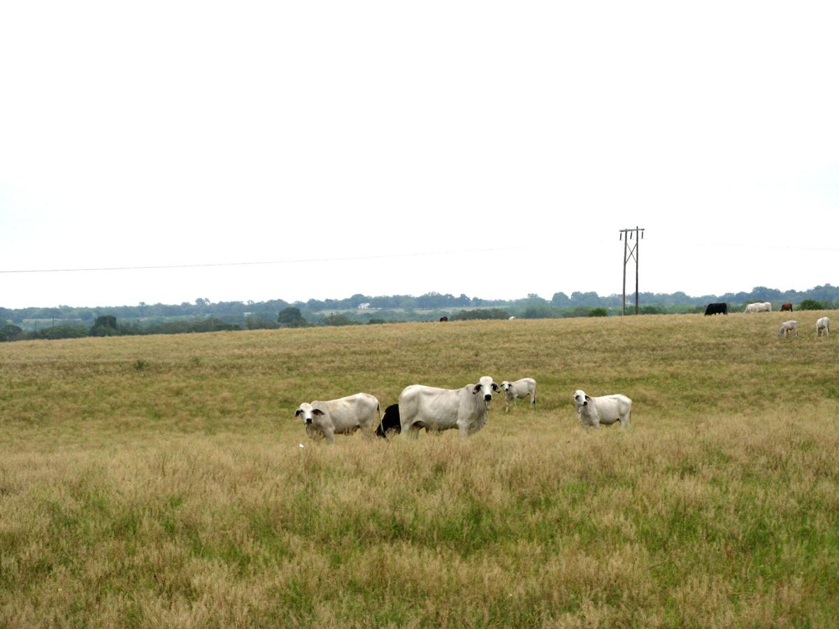 Exploring forage for winter feed
