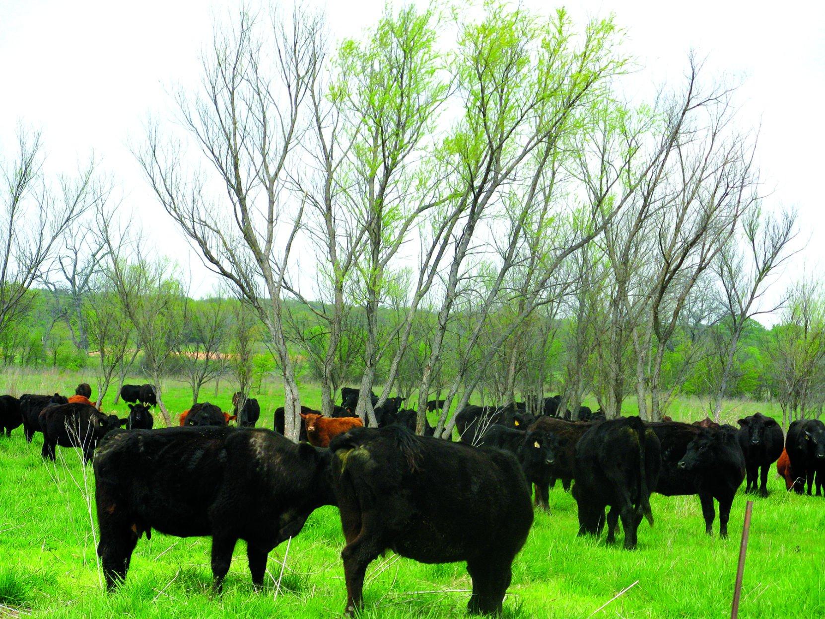 Preparing for the worst Good pasture management