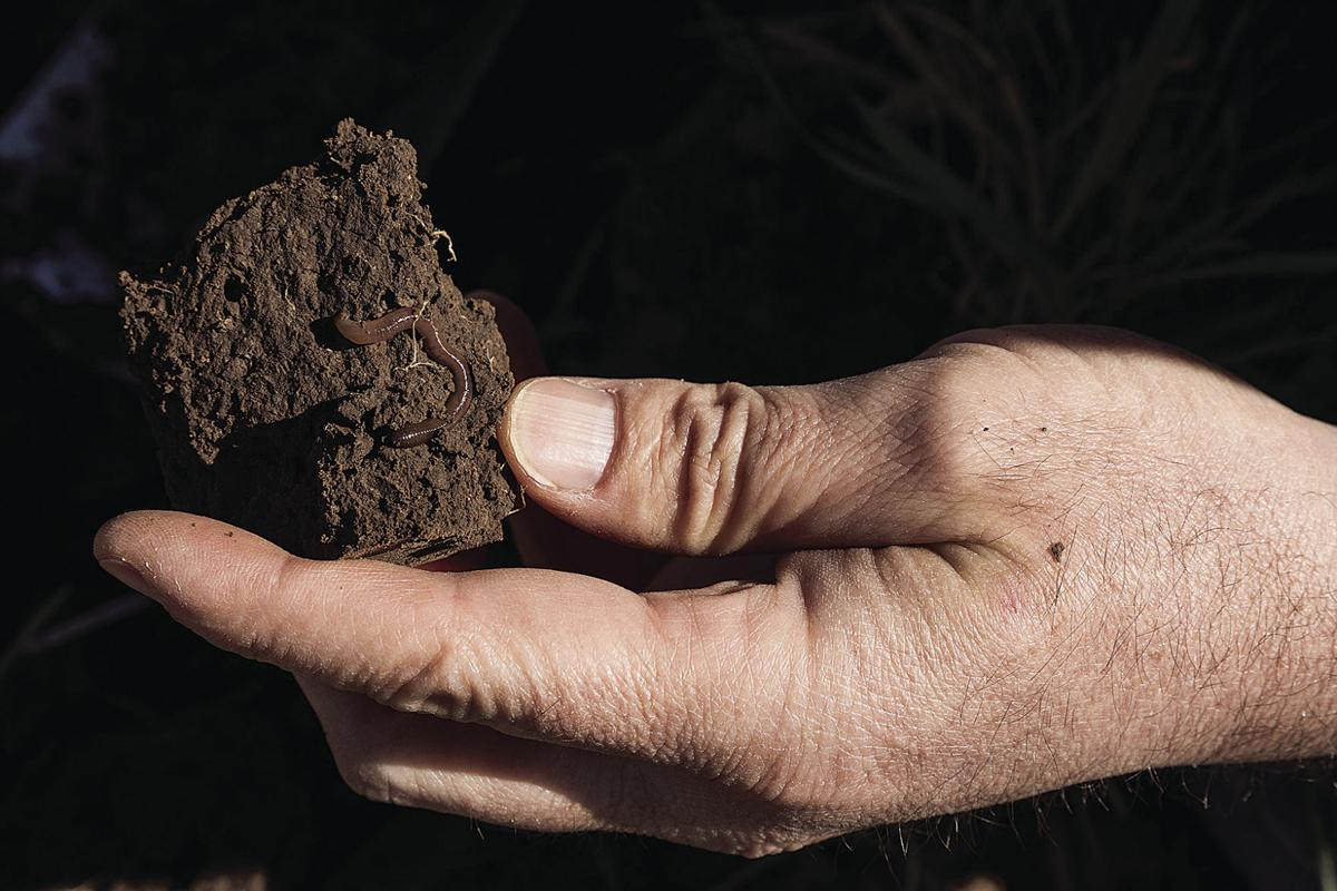 5 reasons why soil biology matters on the farm