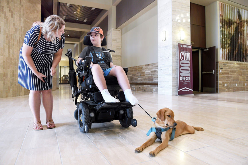 Service Dog Surprise