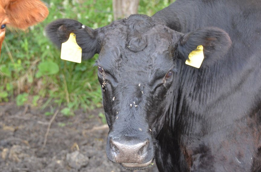 Protect the herd with an insect control plan
