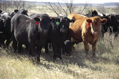 East Texas Pasture Management workshop Feb. 21 in Overton