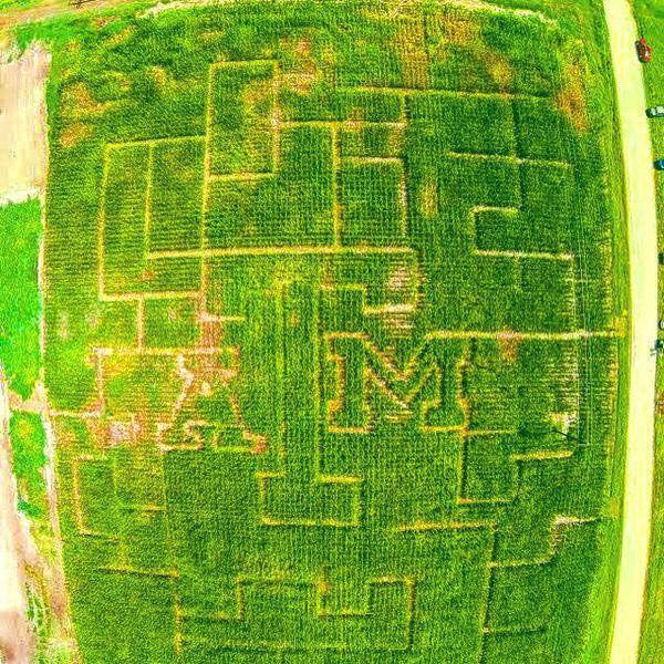 Texas A Amp M Agronomy Club Creates Aggie Themed Corn Maze