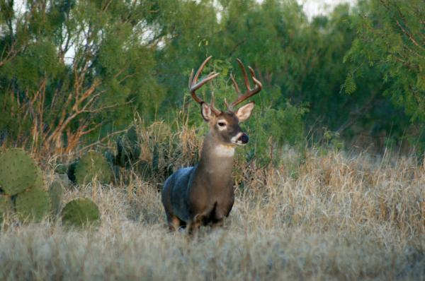 Big Bucks Oil and Big Buck Hunting not mixing well | Fish Tales | theeagle.com