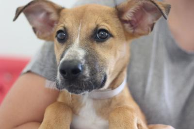 Pet of the Week: Olive