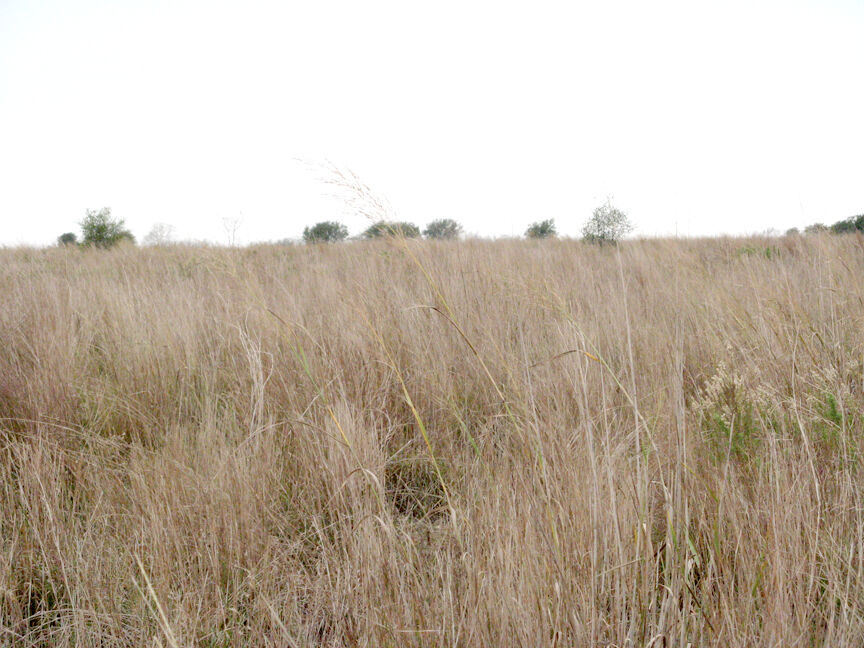 Get ahead of drought concerns with detailed management strategy