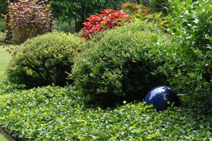 Beau Texas Gardening: Wintercreeper Euonymus